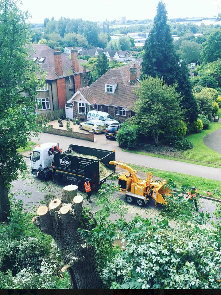 Rose Tree Services